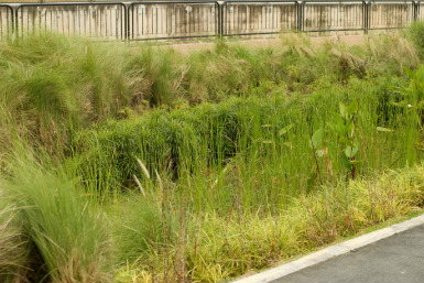 Rain gardens provide an effective stormwater management tool.